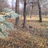 В парке осень :: Миша Любчик