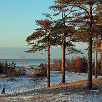 Северодвинск. На берегу Белого моря :: Владимир Шибинский