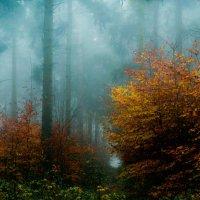 Туман в лесу :: Вадим Вайс