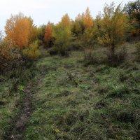 Вот и травы  разлохматились... :: Валерия  Полещикова