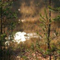 В лесу :: STATUS974