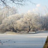 зима в ноябре :: Елена
