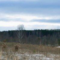 Начало зимы :: Руслан Веселов