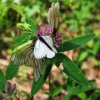 Гармония в природе - цветок из бабочек и растений :: Damir Si