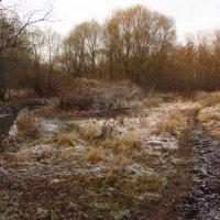 IMG_5787 - Ну, очень поздняя осень! :: Андрей Лукьянов