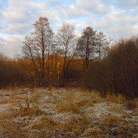 IMG_5817 - Ну, очень поздняя осень! :: Андрей Лукьянов