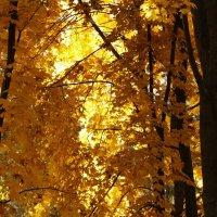 Золото осени :: Татьяна_Ш