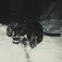 Весь в снегу :: Света Кондрашова