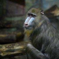 В гостях у Новосибирского зоопарка :: Юлия
