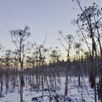 Самозванец в лесу :: Viktor Pjankov