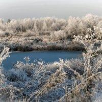 Начало зимы :: Анна Никонорова