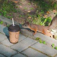 Утро белки начинается с кофе :: Алена Шпинатова