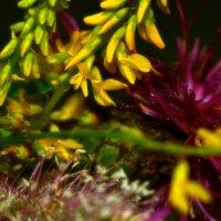 Лютики цветочки... :: Sozidatel Евгений Щербаков