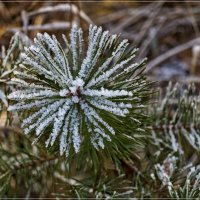 Зимний цветок :: Андрей Дворников