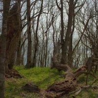 В лесу над морем :: Константин Николаенко