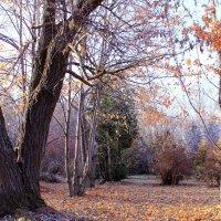 В парке бродит осень :: Татьяна Ломтева