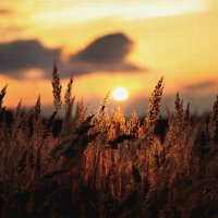Impression, soleil levant :: Светлана Темнова