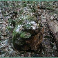 Лесной  бегемотик. :: Ольга Кривых