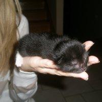 Спят уставшие котята... :: Елена