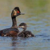 Мать и дитя :: Анна Солисия Голубева