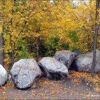 Я люблю раннюю осень. :: Anna Gornostayeva
