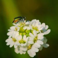 Жизнь жуков :: Денис Казаков