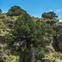 И на камнях растут деревья :: Дмитрий Потапкин