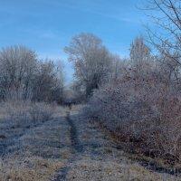 Зима вступает во владения :: Любовь Нефёдова