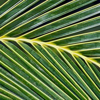 Ритм пальмового листа 2 :: Татьяна Губина