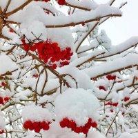 снег пушистый :: Светлана
