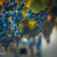 виноград :: Тася Тыжфотографиня