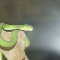 змея :: Дмитрий Аргус