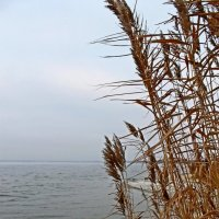 ...ветер... :: Александр Герасенков
