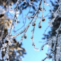 Зима :: Марина Алгаева
