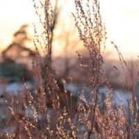 зима начинается :: Лариса Тарасова