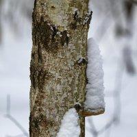 Зимний лес :: Ирина Рябкова