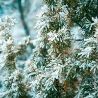 Осень-Зима :: Ольга Бекетова