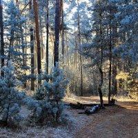А в лесу таинственно и тихо... :: Лесо-Вед (Баранов)