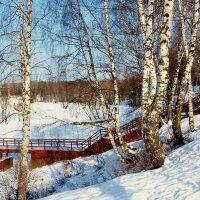 Прошлые зимы.... :: анна нестерова