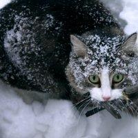 Пусти кота на балкон... И он переловит всех синиц :с Что поделать, охотник... :: Виктория Котович