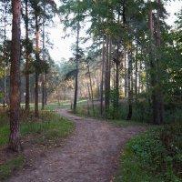 Утро в лесу. :: Валерий Костенко