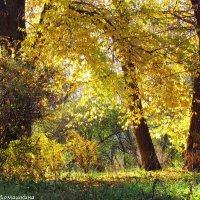 Осень в парке. :: Валентина Домашкина