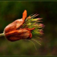Весенний цветик :: galina tihonova