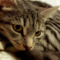 Не грусти, кошка :: Марина Беляева