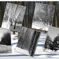 Зарисовки прошлой зимы... :: Тамара (st.tamara)