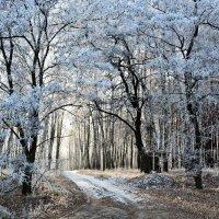 Дорога в лес :: Мария Богуславская