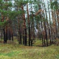 в лесу :: Ирина ***