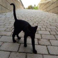 cat :: Elena Pashkova