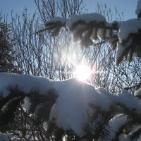 Солнце на ладошке :: Вера Андреева