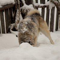 Бим любит снег! :: Ксюша Гасич